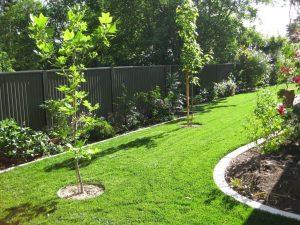 RTF Tall Fescue Instant Lawn