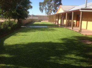 Sir Walter Instant Lawn - Riverland - Jan 2014