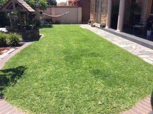 Sir Walter Instant Lawn - Semaphore Park - Nov 2014