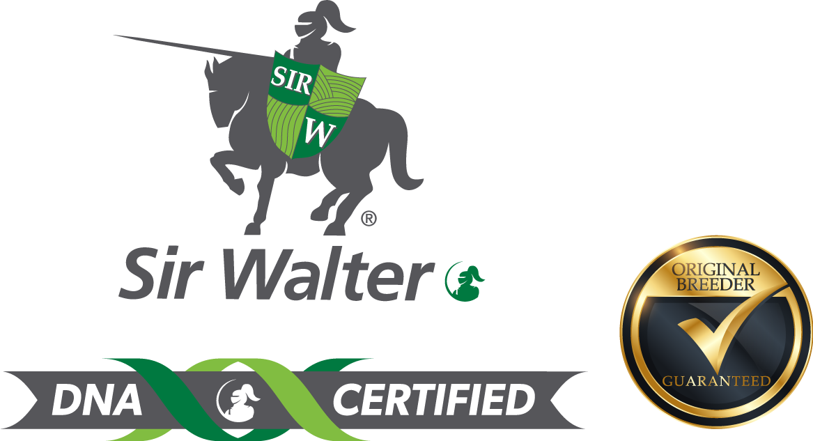 Sir Walter DNA Certified 4